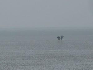 ein Paar läuft mit Regenschirmen durch das Wattenmeer. (Sehnsucht)