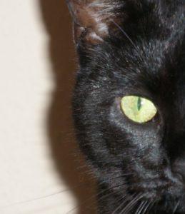 halbes Katzengesicht in dem das Auge hervorsticht. (cat)