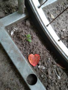 Neben einem Fahrradreifen auf dem Boden liegendes Papierherz. (Love)
